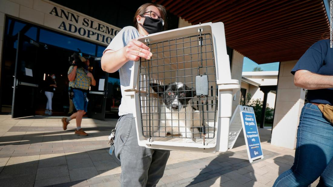 Katy Gay carries a dog as the Houston SPCA transferred more than 100 animals to the Austin Humane Society.