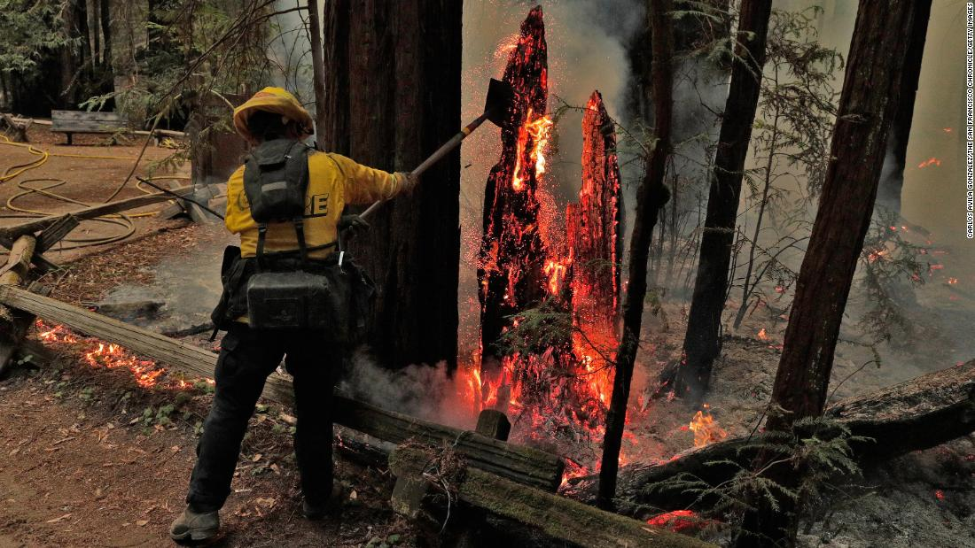 Firefighter Juan Chavarin pulls down a burning tree trunk in Guerneville, 캘리포니아, 8 월 25.