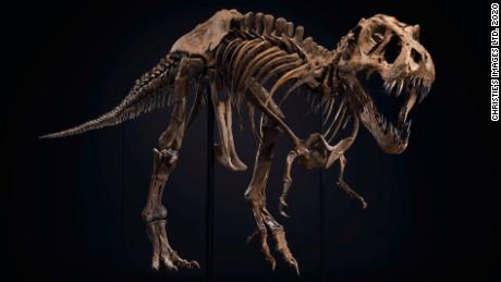 티. rex skeleton sells for $  31.8 million setting new world record