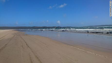 One of the sandbars where the pod of whales washed up in Tasmania, Australië.