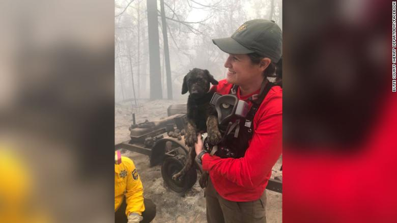 A puppy was pulled from the rubble in an area devastated by wildfires. Rescuers named him Trooper