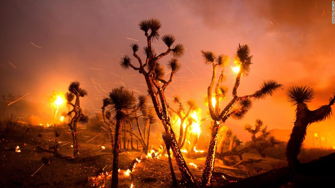 Wind whips embers from Joshua trees burned by the Bobcat Fire in Juniper Hills on September 18