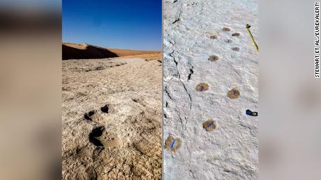 Elephant (왼쪽) and camel (권리) trackways were discovered.