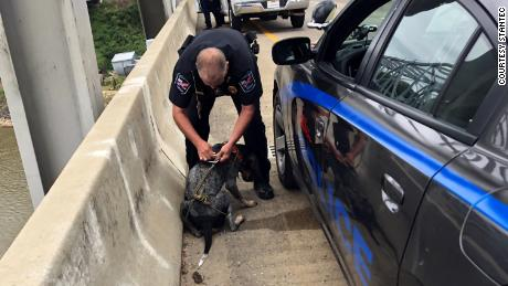 An officer with the Natchez police department removes the harness from around the dog.