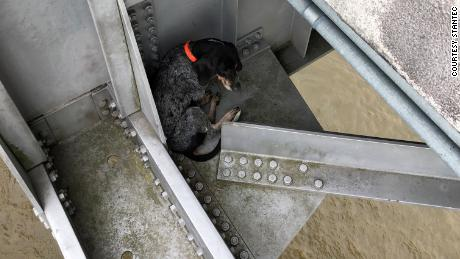 The dog found herself stranded above the Mississippi River.