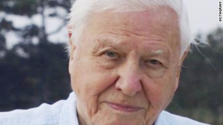 David Attenborough joined Instagram. Four hours later he had 1 miljoen volgelinge