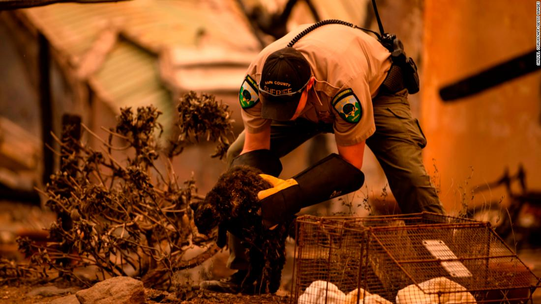 An officer with Napa County Animal Control rescues a cat after the Glass Fire passed through Napa Valley, 캘리포니아, 9 월 28.