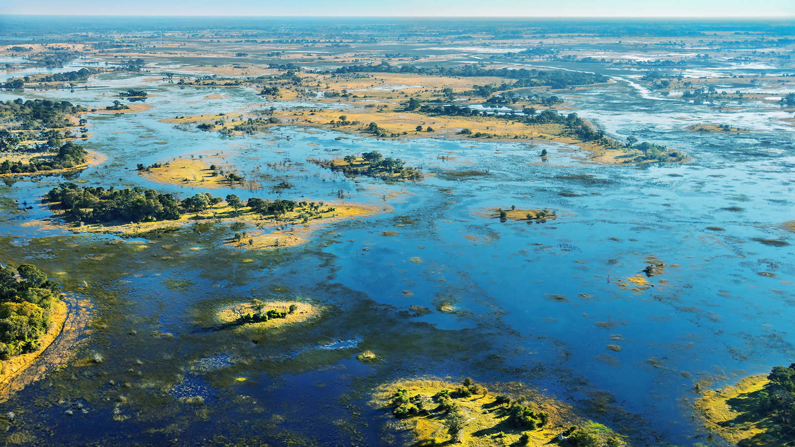 Each year when the Okavango River floods with water, it transforms into a spectacular wilderness.