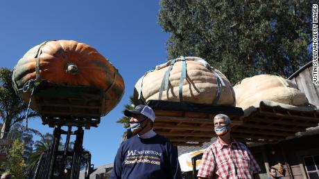 Travis Gienger and Steve Daletas stand next to their large pumpkins during the Safeway World Championship Pumpkin Weigh-Off.