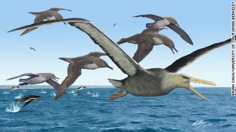 Antarctic fossil could have been the biggest flying bird ever, 研究发现