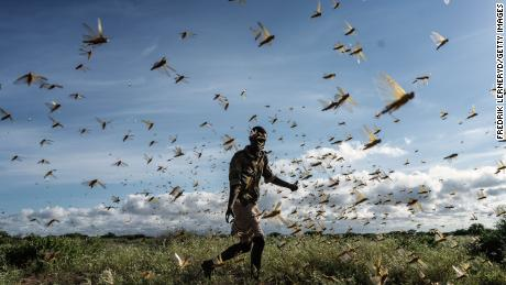 A man chases away a swarm of desert locusts on May 21, 2020 in Samburu County, Kenya.