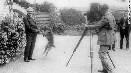 رئیس جمهور هاردینگ با سگ خانگی لادی ، در ژوئن 1922 در مقابل کاخ سفید عکس گرفته شده است.