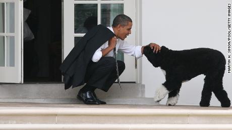 رئیس جمهور باراک اوباما در سال 2012 سگ خود را بو بیرون از دفتر بیضی کاخ سفید حیوانات خانگی اعلام کرد.