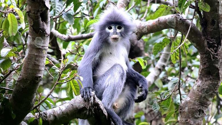 Scientists discover new endangered primate species, with only 260 left