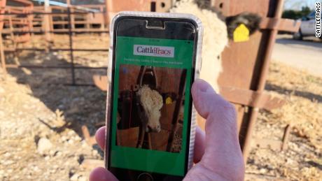 CattleTracs ، یک برنامه آینده برای نظارت بر گاو ، با استفاده از فن آوری تشخیص چهره حیوانات را از هم جدا می کند.