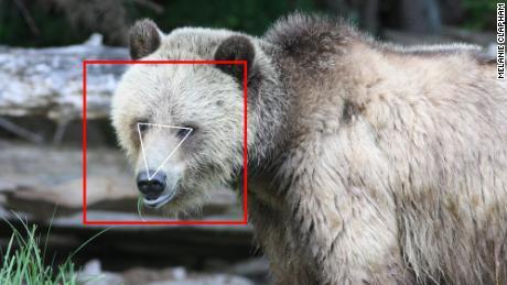 تاکنون BearID 4674 تصویر از خرس های گریزلی جمع آوری کرده است.