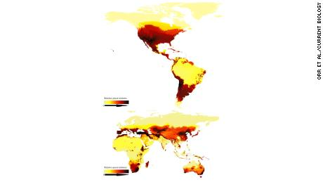 This map shows modeled relative number of different of bee species around the world and depicts the bimodal latitudinal gradient. Darker areas have more species.