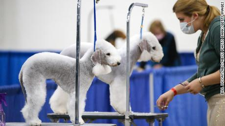 How to watch National Dog Show 2020