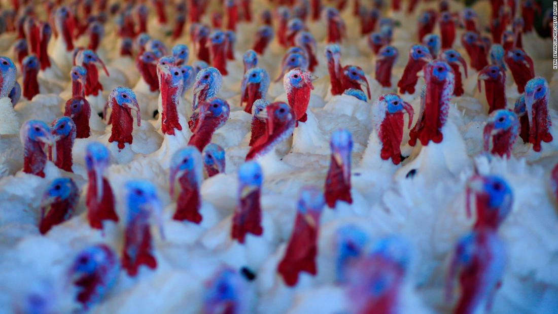 Turkeys are seen at a farm in Orefield, ペンシルベニア, on November 20.