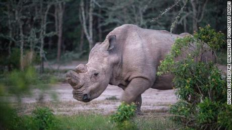 Sudan lived alone in a 10-acre enclosure, with 24-hour guards.