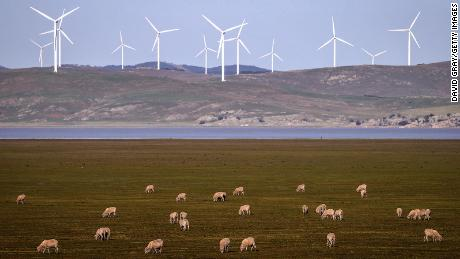 Sheep graze in front of wind turbines on Lake George on September 1, 2020, on the outskirts of Canberra, Australia.