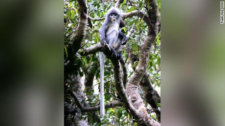 'Critically endangered' monkey and armored slug among 503 new species named in 2020