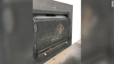 This angry-looking tawny owl needed help after getting stuck inside a fireplace.