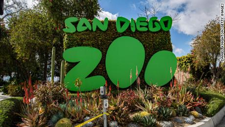 Great apes at the San Diego Zoo receive a Covid-19 vaccine for animals