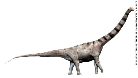 The newly discovered dinosaur is thought to have a body mass exceeding or comparable to an Argentinosaurus, which measured up to 40 meters and weighed up to 110 tons.