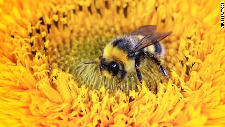 Bees aren't getting enough sleep, thanks to some common pesticides