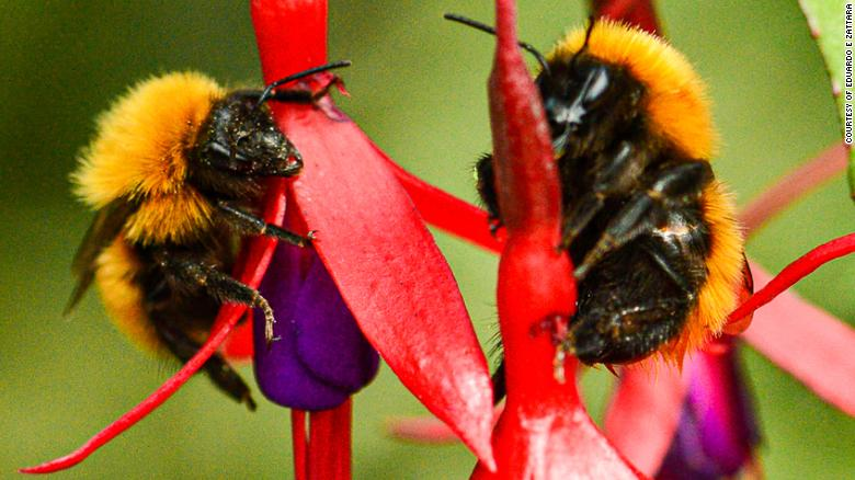 Staggering number of wild bee species unaccounted for since the '90s