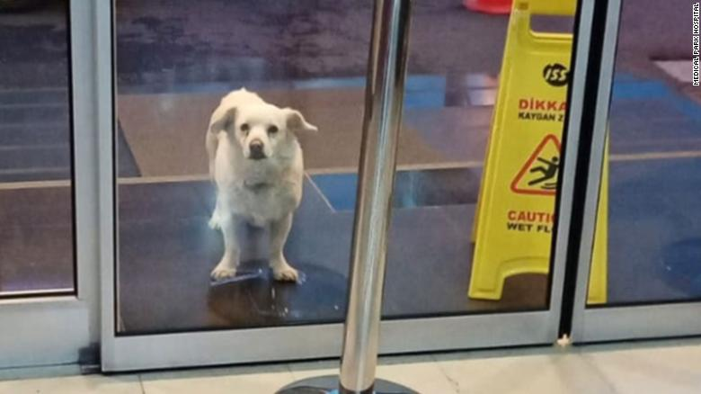 Loyal dog waits for six days outside hospital for her sick owner