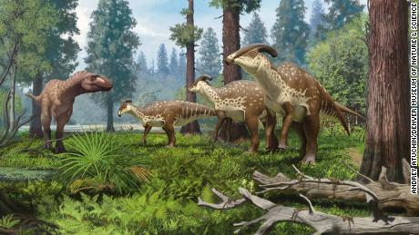 An illustration of a group of Parasaurolophus dinosaurs being confronted by a tyrannosaurid in the subtropical forests of New Mexico 75 milioni di anni fa.