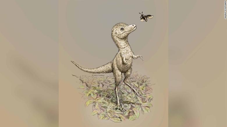 Baby tyrannosaurs were about the same size as a dog, new research shows