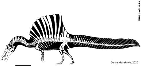 Spinosaurus material has been recovered in modern-day Egypt and Morocco.