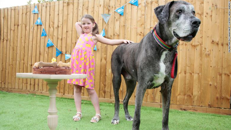 Freddy the Great Dane, il cane più alto del mondo, è morto