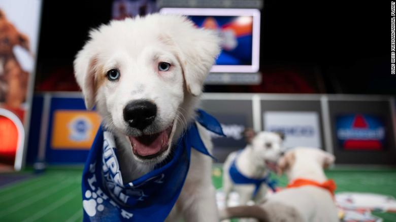 Puppy Bowl XVII: What you need to know about the biggest game on all fours