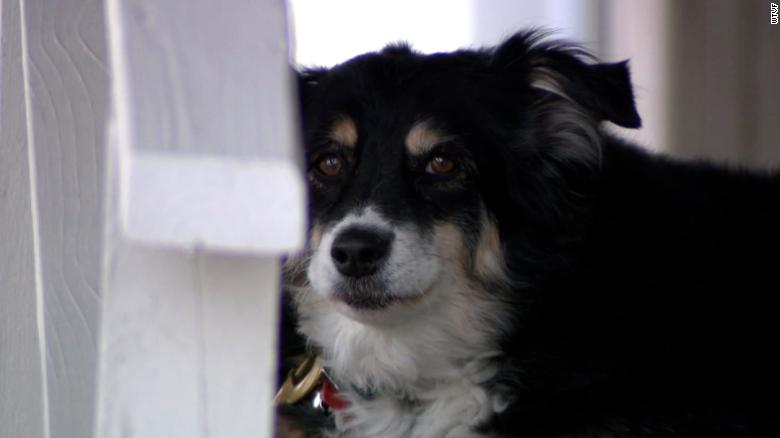 An 8-year-old border collie named Lulu is inheriting a $  5 million trust