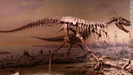Young meat-eating dinosaurs and their voracious appetites shaped the world 100 million years ago.