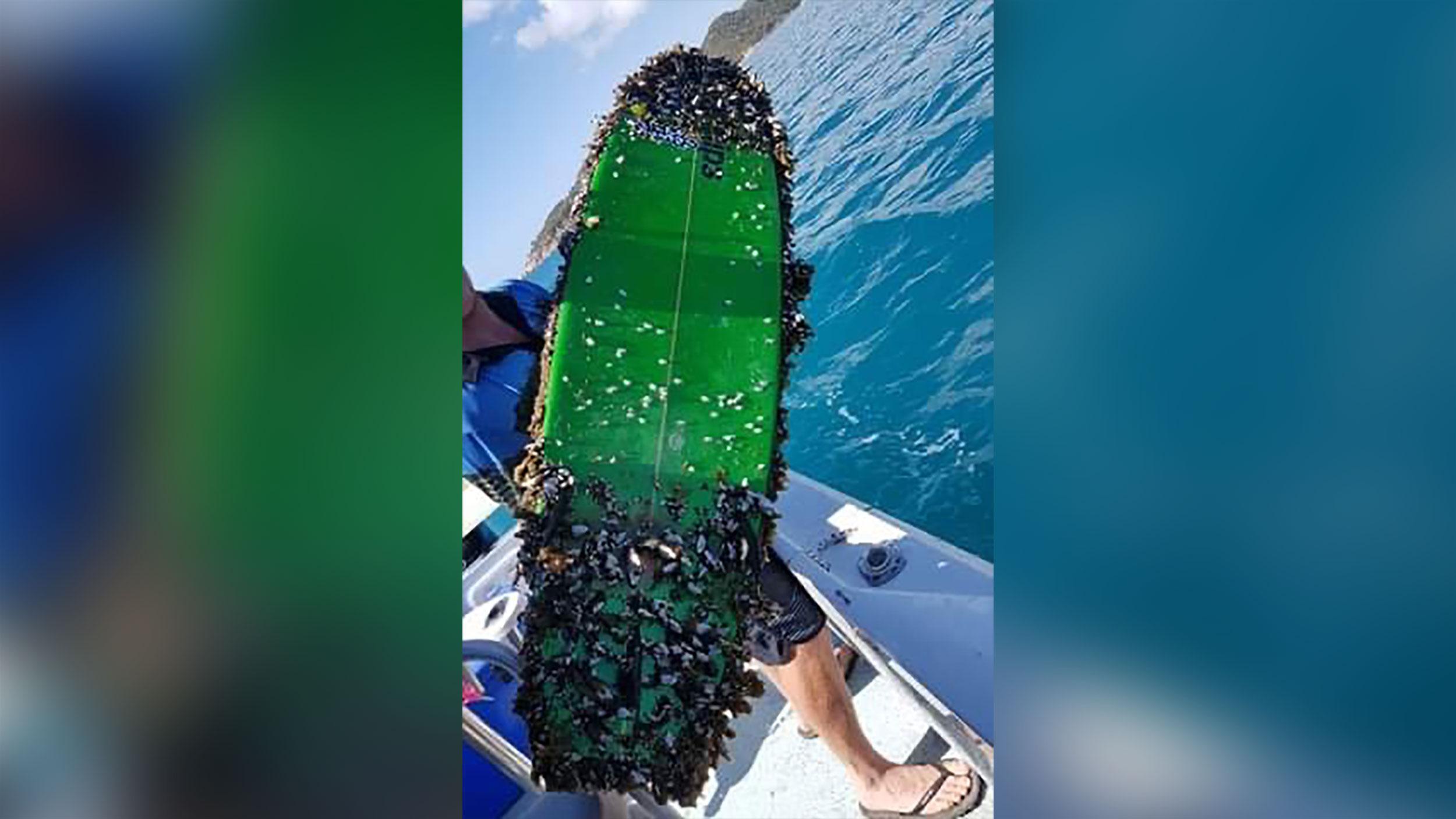 surfboard pierdere în greutate cum să pierdeți în greutate în 8 săptămâni