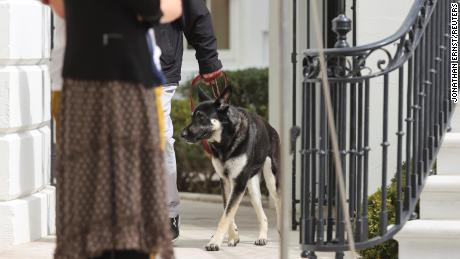 Biden's dog Major returns to White House after 'ruff' start