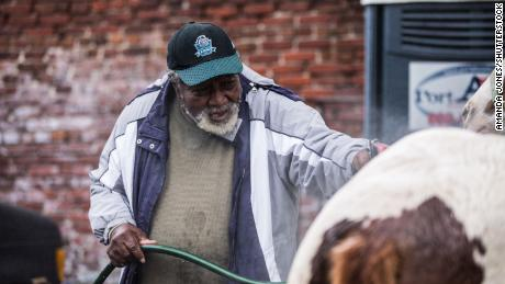 Ellis Ferrell prepares his horses for a voter turnout event last November.