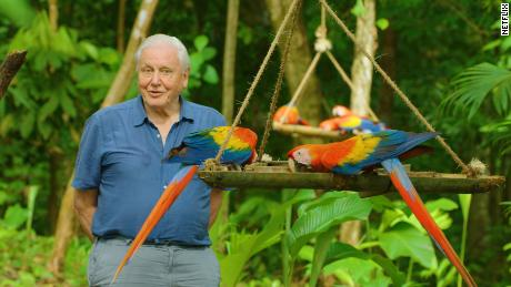 Sir David Attenborough in the Netflix docuseries 'Life in Color.'