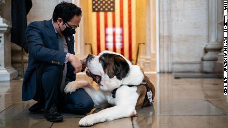 Los perros de consuelo encuentran apoyo bipartidista en Capitol Hill