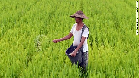 About 70% of Myanmar's population are employed inthe agricultural sector, according to the World Bank.