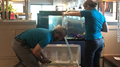 Museum employees transfer Freckles to his new home.