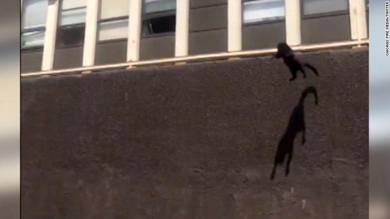 Cat jumps from fifth floor of burning building, bounces and strolls away