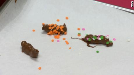 A Maryland candy company is cooking up chocolate covered cicadas