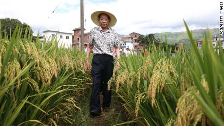 Chinese agronomist Yuan Longping, who cultivated the world's first high-yield hybrid rice strain in the 1970s, died on Saturday.