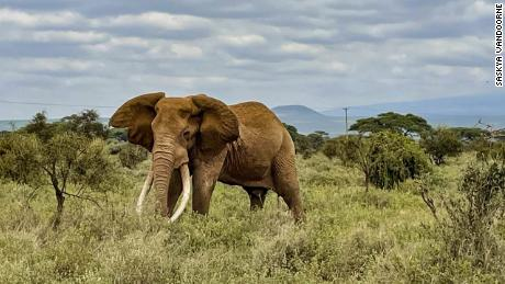 Why Kenya is trying to count every single animal